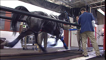 15 Best Universities For Master S Degrees In Equine